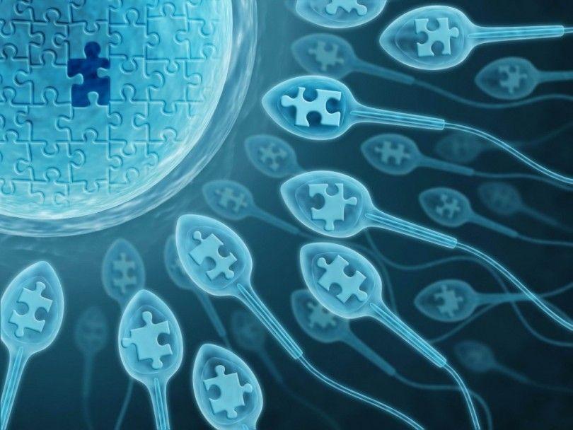 vremya-vosproizvedeniya-spermatozoidov