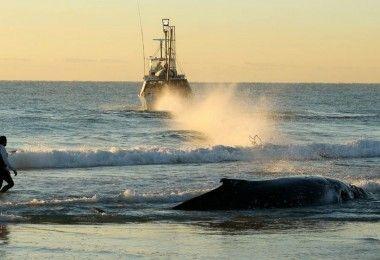 кит берег суицид