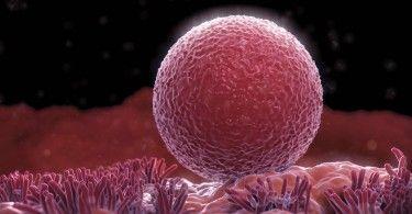 эмбрион беременность плод