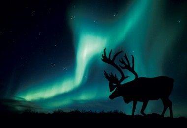 Северное сияние северный олень экология