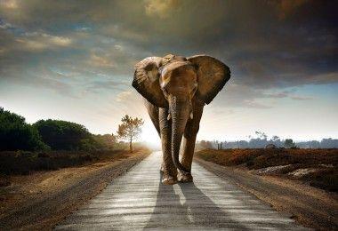 слон животное биология