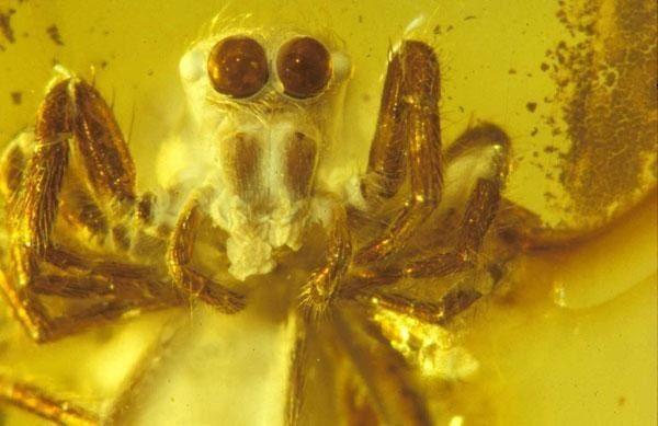 паук в янтаре