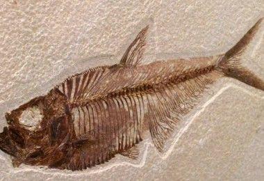 рыба палеонтология останки
