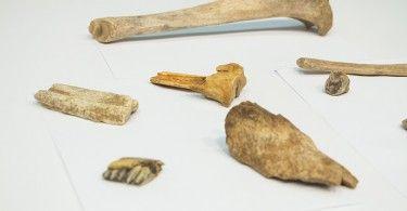 кости археология