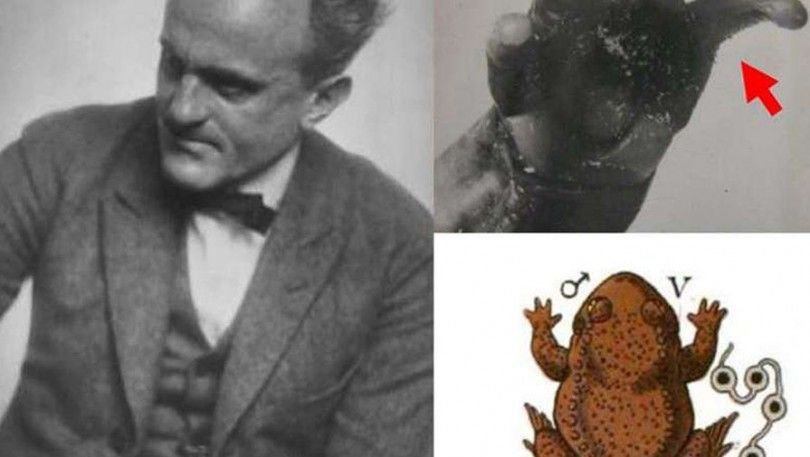Пауль Краммер жаба