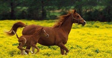 лошадь конь коняшка жеребёнок