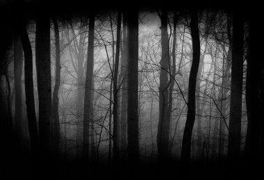 лес мрачность жуть