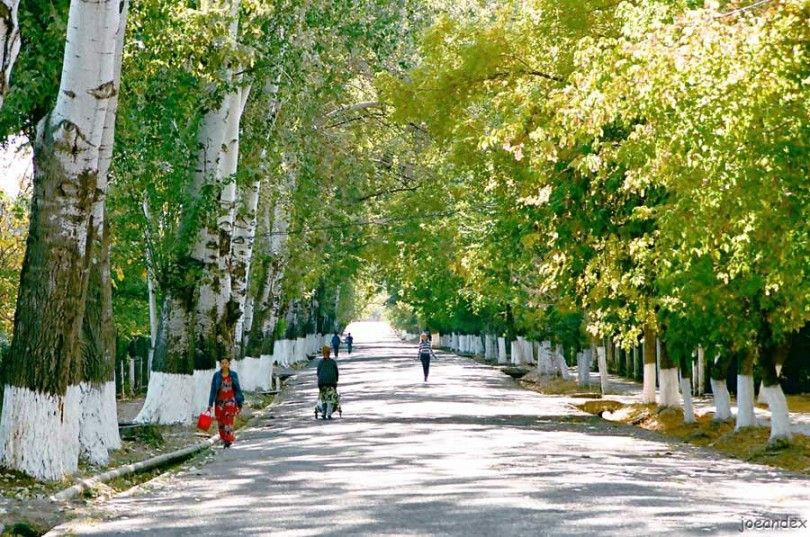 Тополиная аллея деревья деревня люди