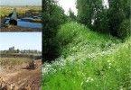 рекультивация природа растения