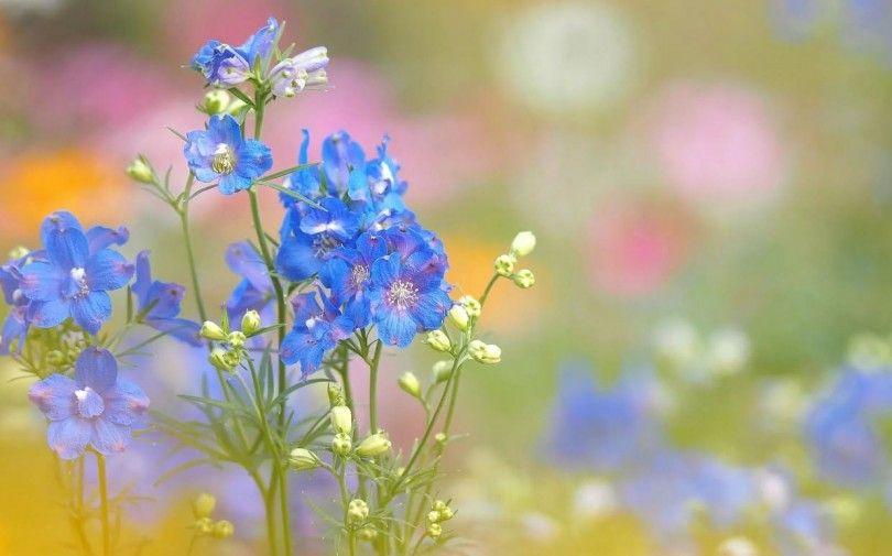 полевые цветы растения природа экология